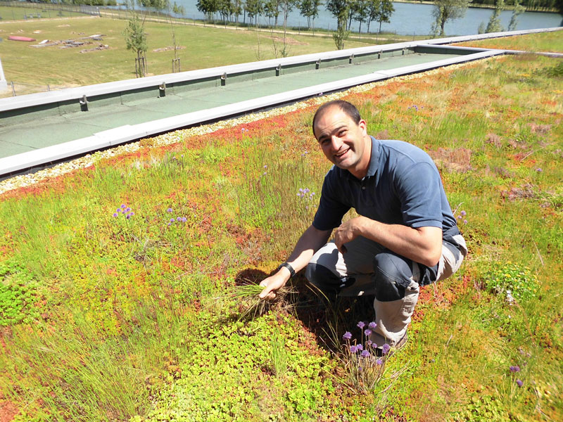 Weeding The Green Roof