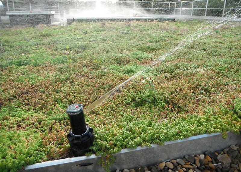 Green Roof Irrigation Vegetal I D Usa