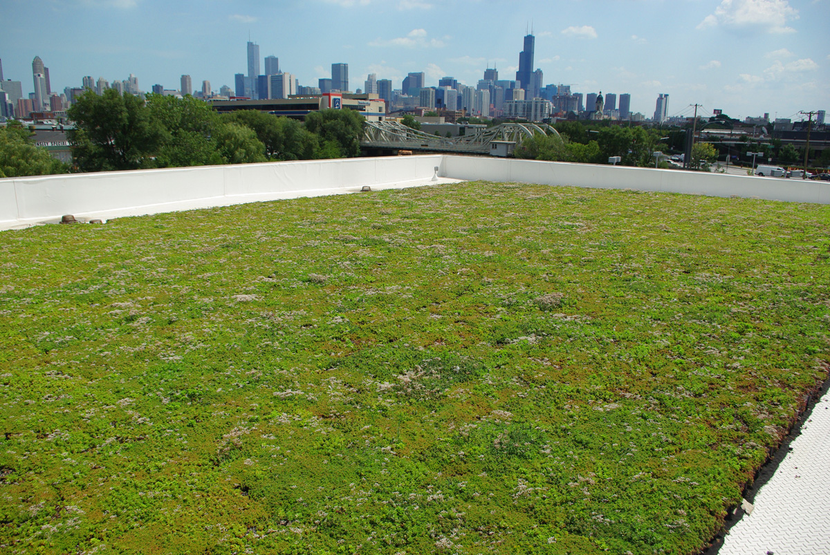 Green Roof On Car Dealership In Chicago Il Vegetal I D Usa
