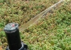 Green Roof Irrigation
