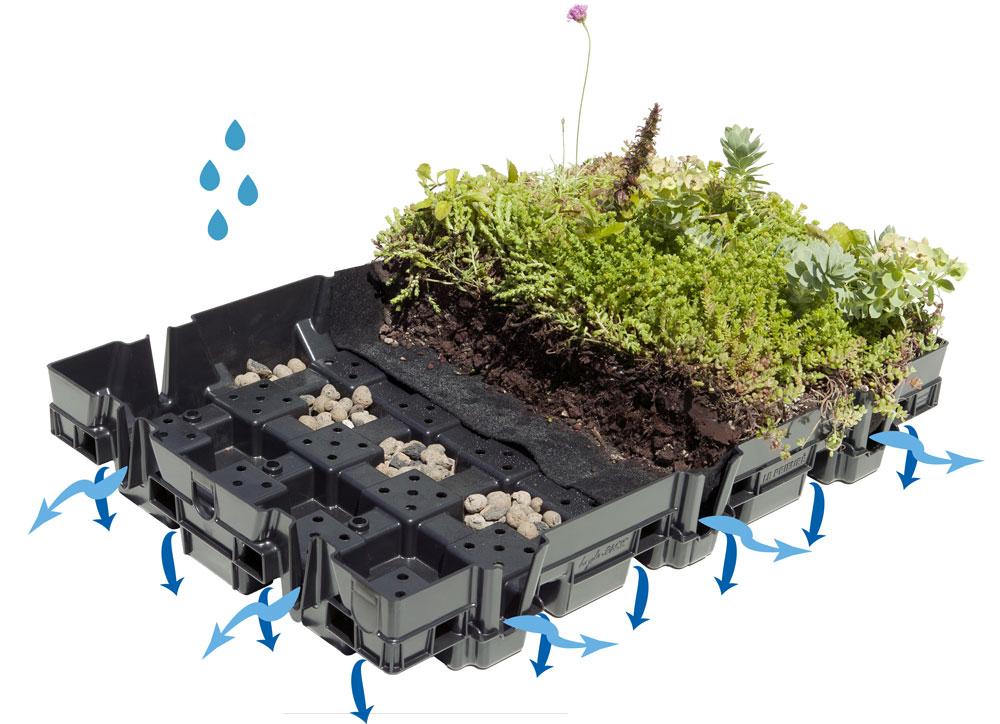 Components of a Successful Green Roof - Vegetal i.D USA