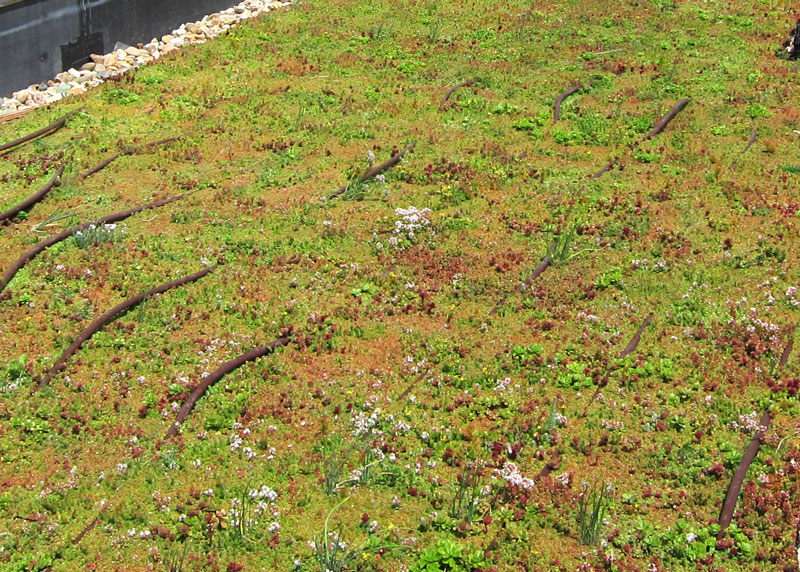 Green Roof Irrigation Vegetal I D Usa