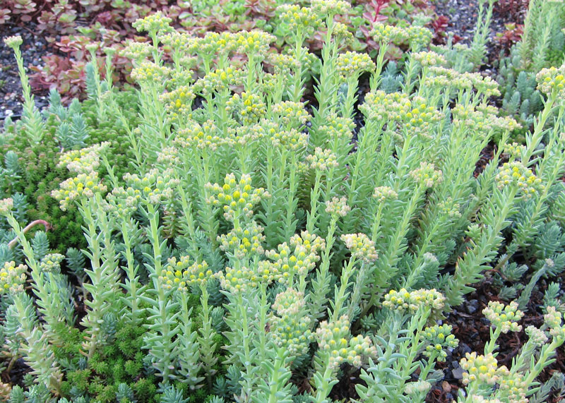 Vegetation Options Vegetal I D Usa